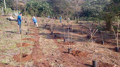 Reflorestamento THCM – Santa Bárbara D´Oeste