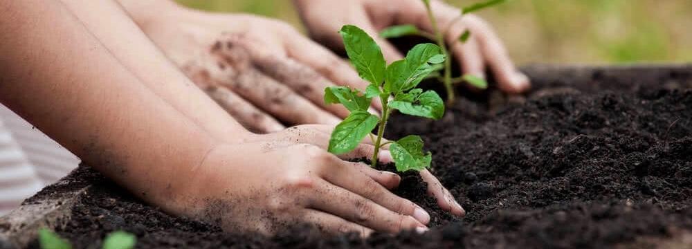 Resíduos da Jardinagem (Lixo Verde)